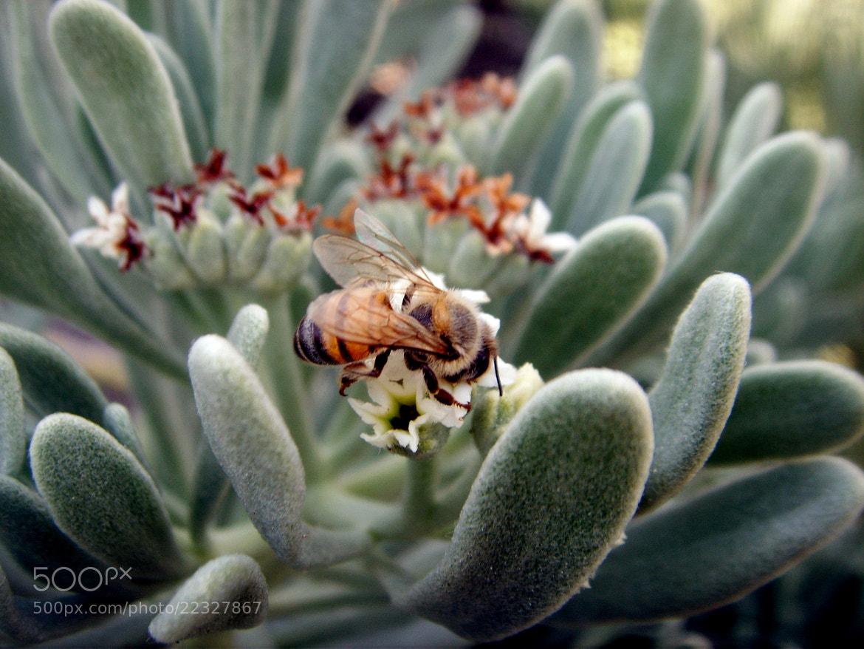 Photograph Bee  by Yuliana  Alejo  on 500px