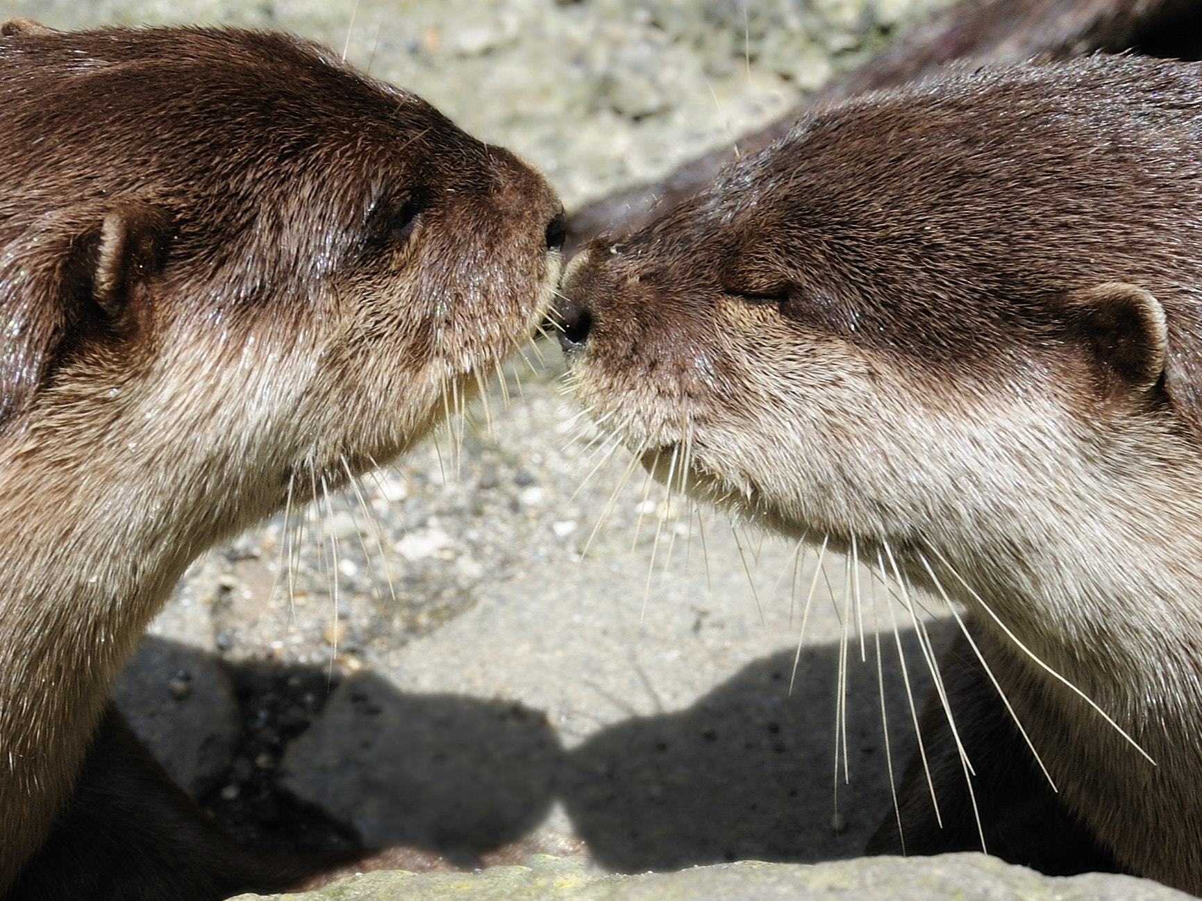 Photograph Kiss by Keith_TT on 500px
