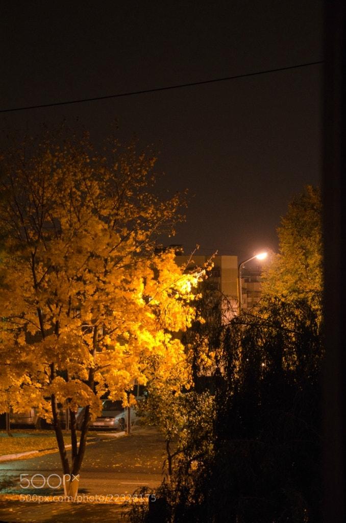 Photograph Autumn Maple by Alex 3D on 500px