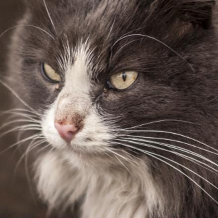 Cat from Belarus