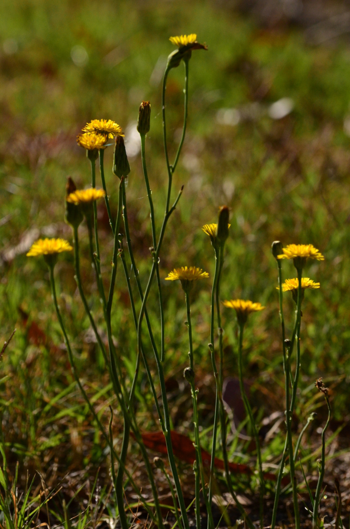 Photograph Sunny Weeds by rayelz design on 500px