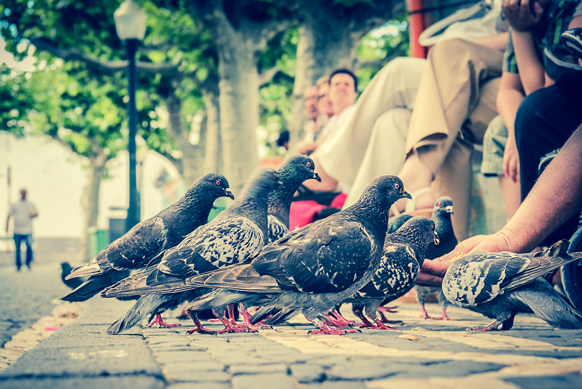 Photograph Feedin' Time! by Ivair Resendes on 500px