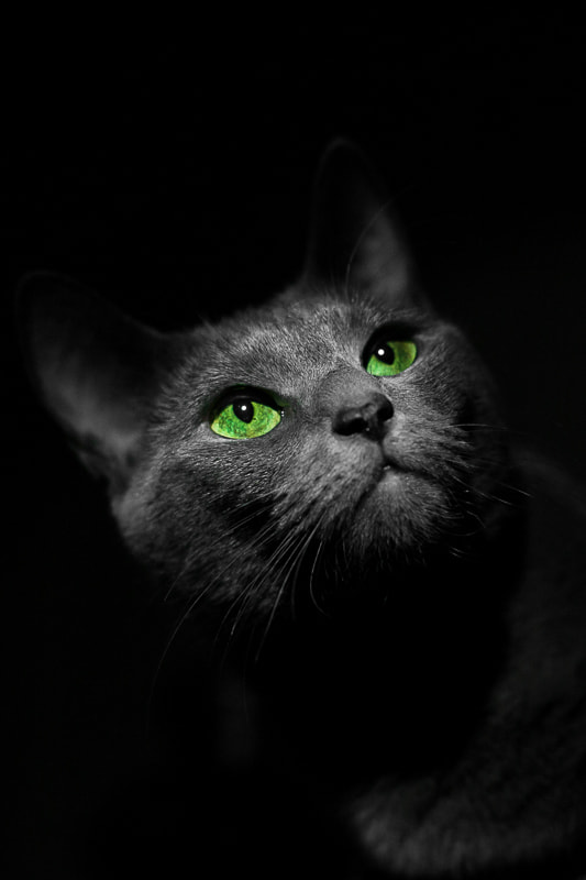 Photograph Night emeralds by Ivan Kokoulin on 500px