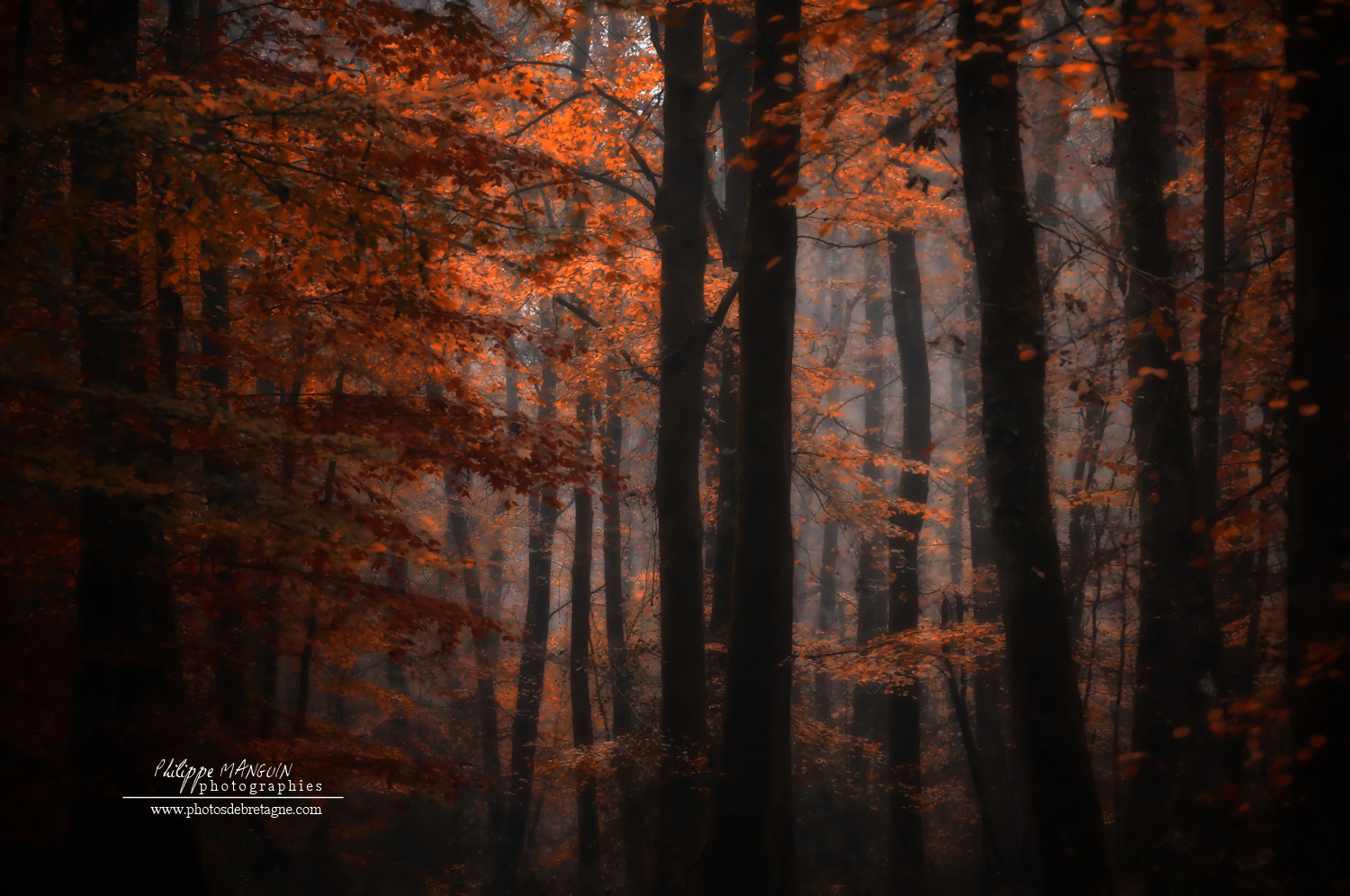 Photograph BROCELIANDE LIGHTS by Philippe MANGUIN on 500px