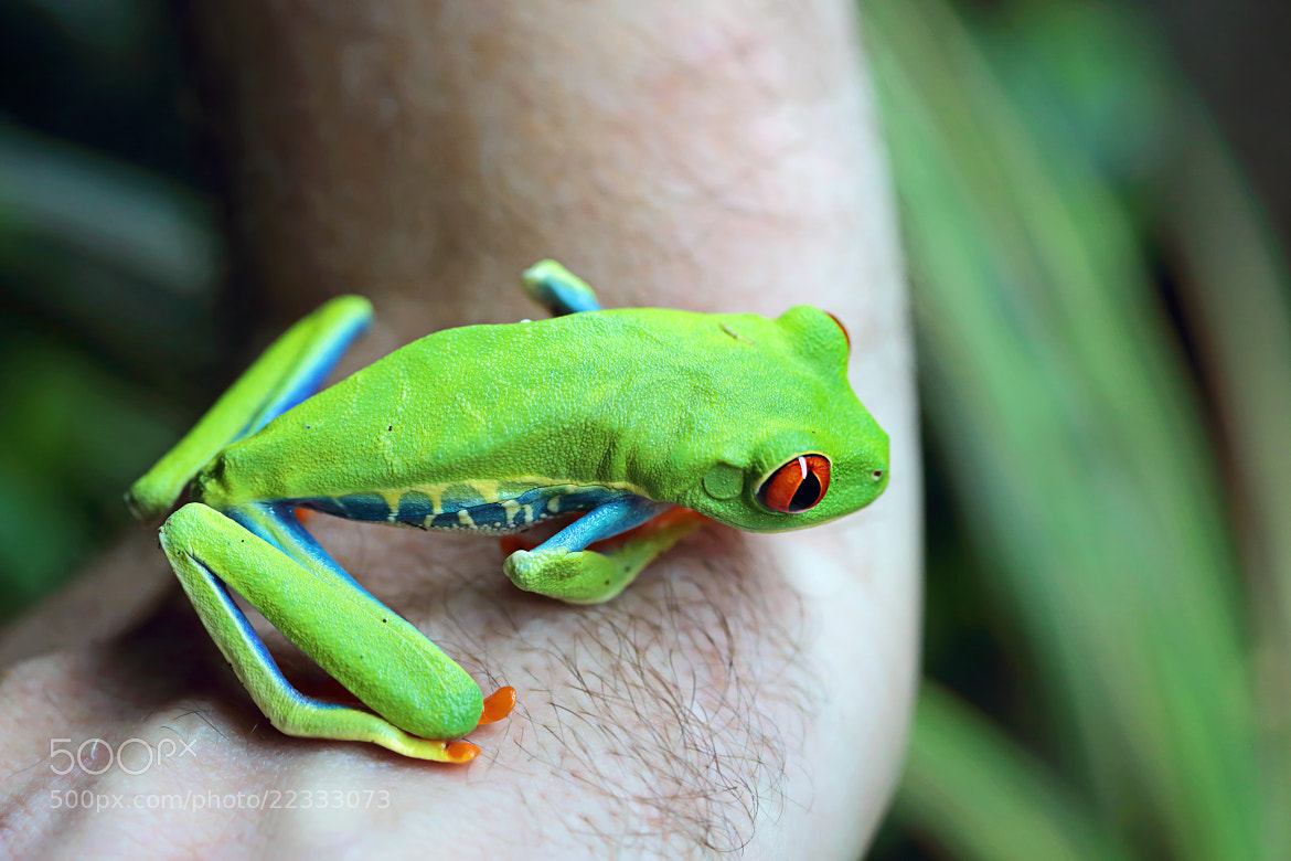 Photograph Red-Eyed by Renae Smith on 500px
