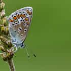 Butterfly in Swiss
