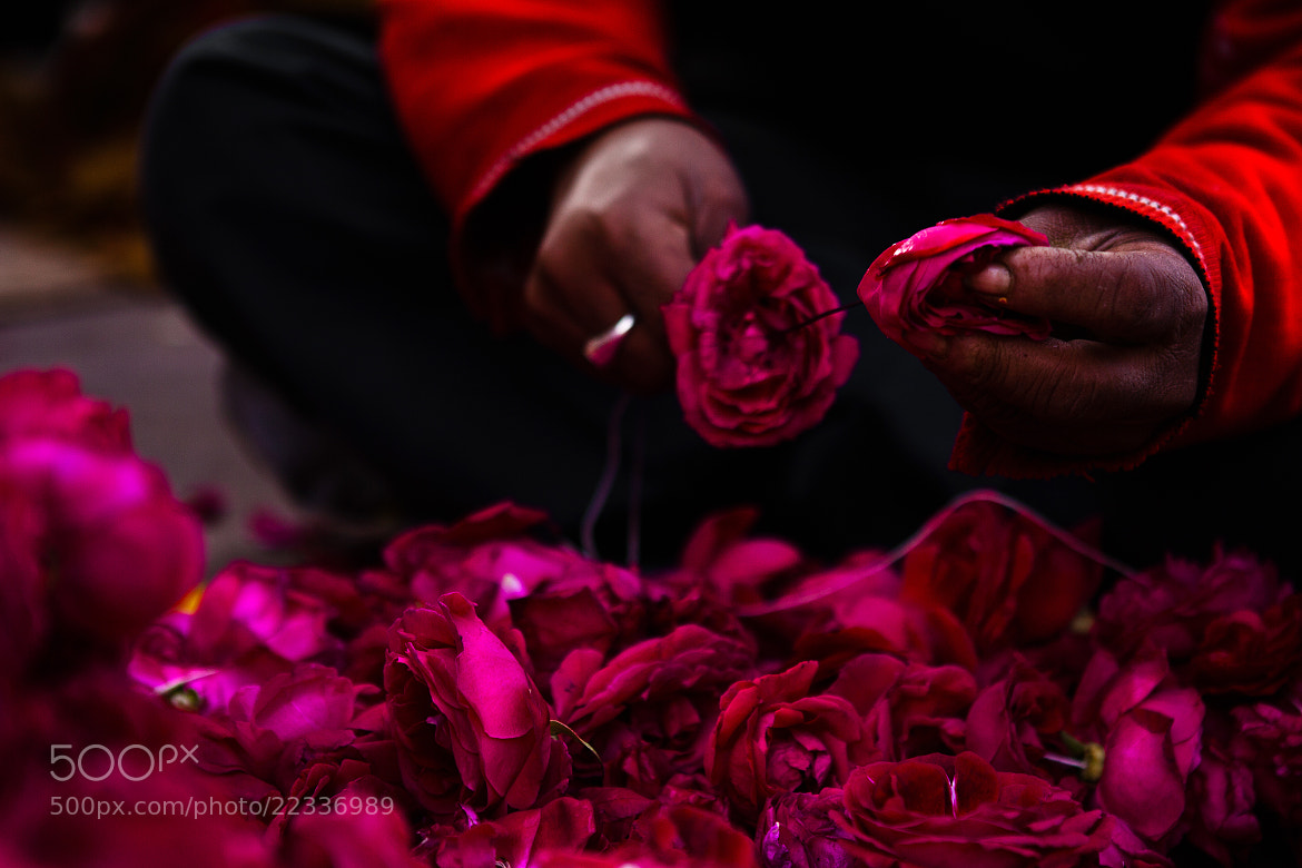 Photograph At work by Giuliana Angelucci on 500px