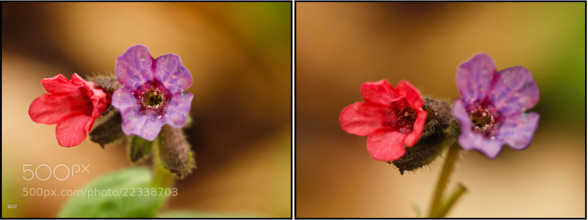 Photograph Forest flower by marius2die4  on 500px