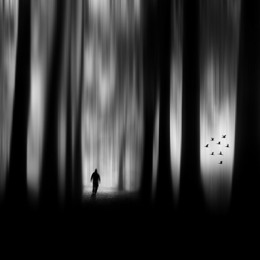 Photograph The forest by Miguel  Cabezas on 500px