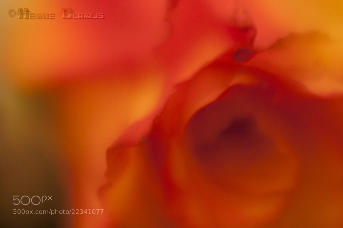 Photograph The emotion of color by Hennie Clarijs on 500px