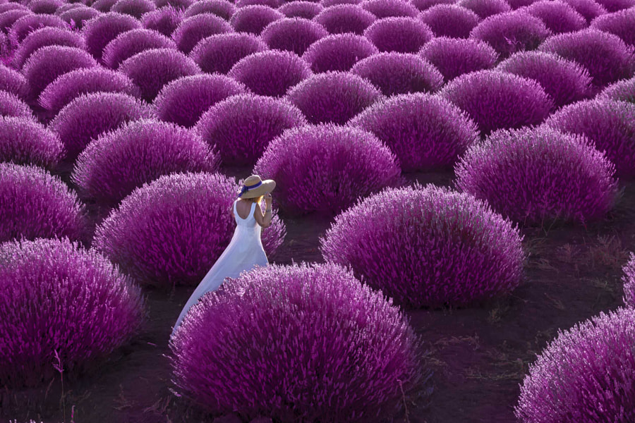 Lavender by Altan Gökçek on 500px.com
