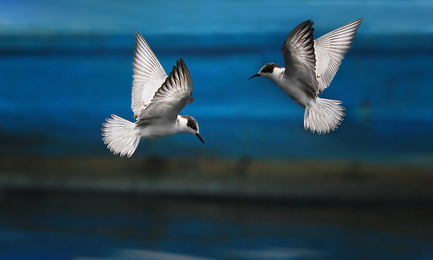 Photograph let's fly by Ayie  Permata Sari on 500px