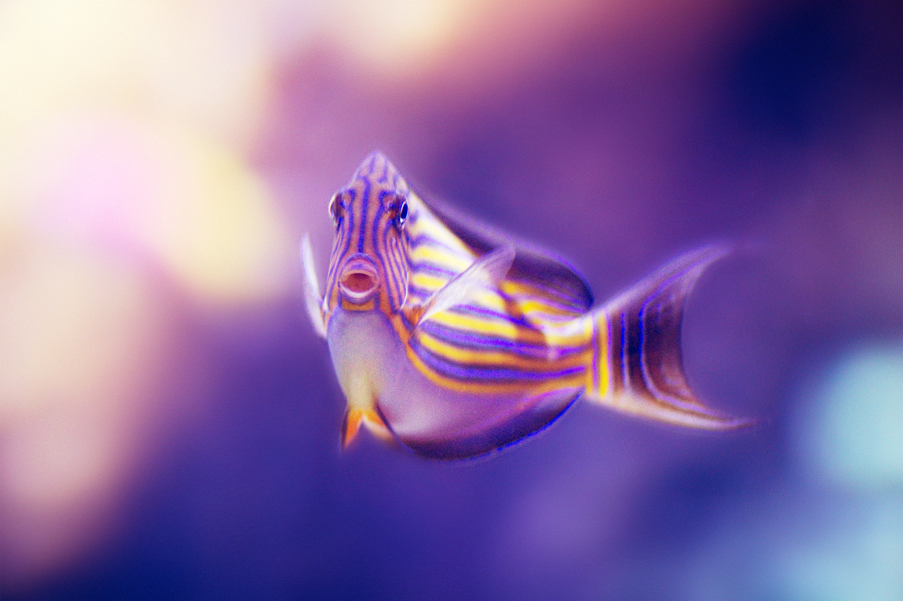 Photograph Fishy by Jens S on 500px
