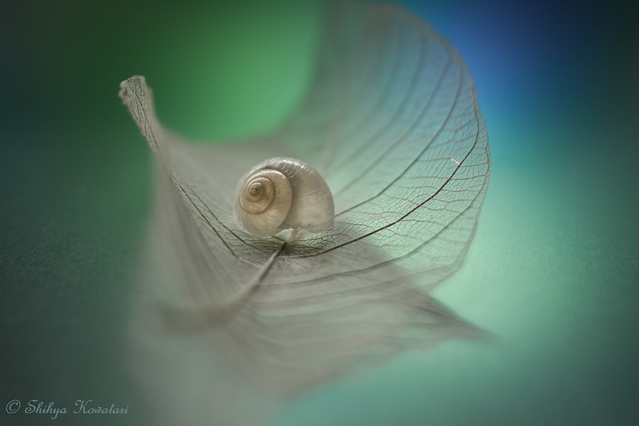 Endless Dream by Shihya Kowatari on 500px
