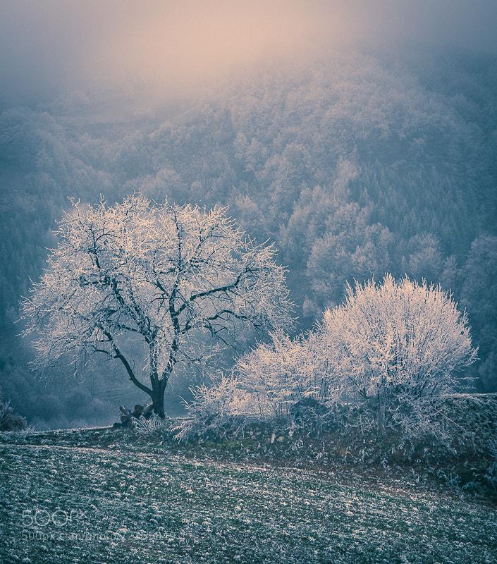 Photograph Winter vonderland by Brane Kosak on 500px