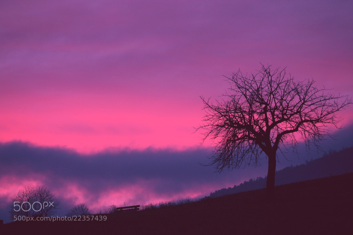 Photograph Pink Sky by EWA CIEBIERA on 500px