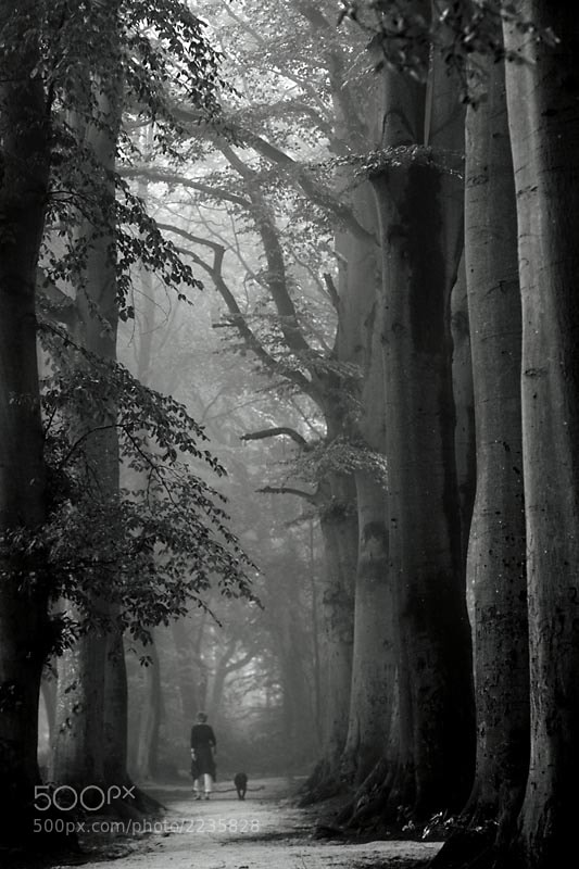 Photograph into the wood by Liesbeth van der Werf on 500px