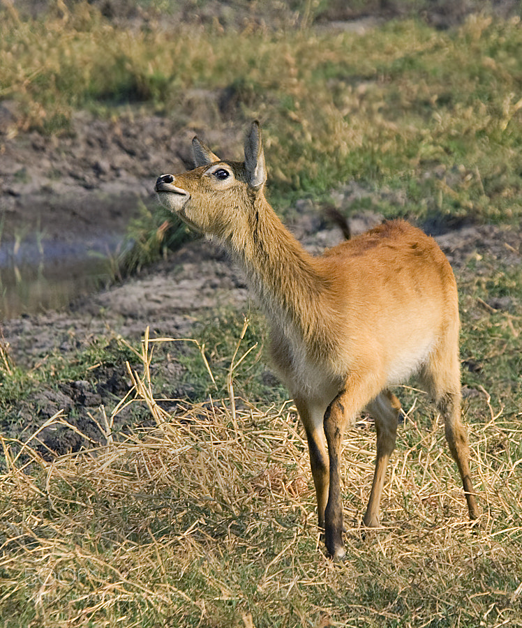 Taken in Kafue NP, Zambia whist dodging Tsetse, 29th September 2005