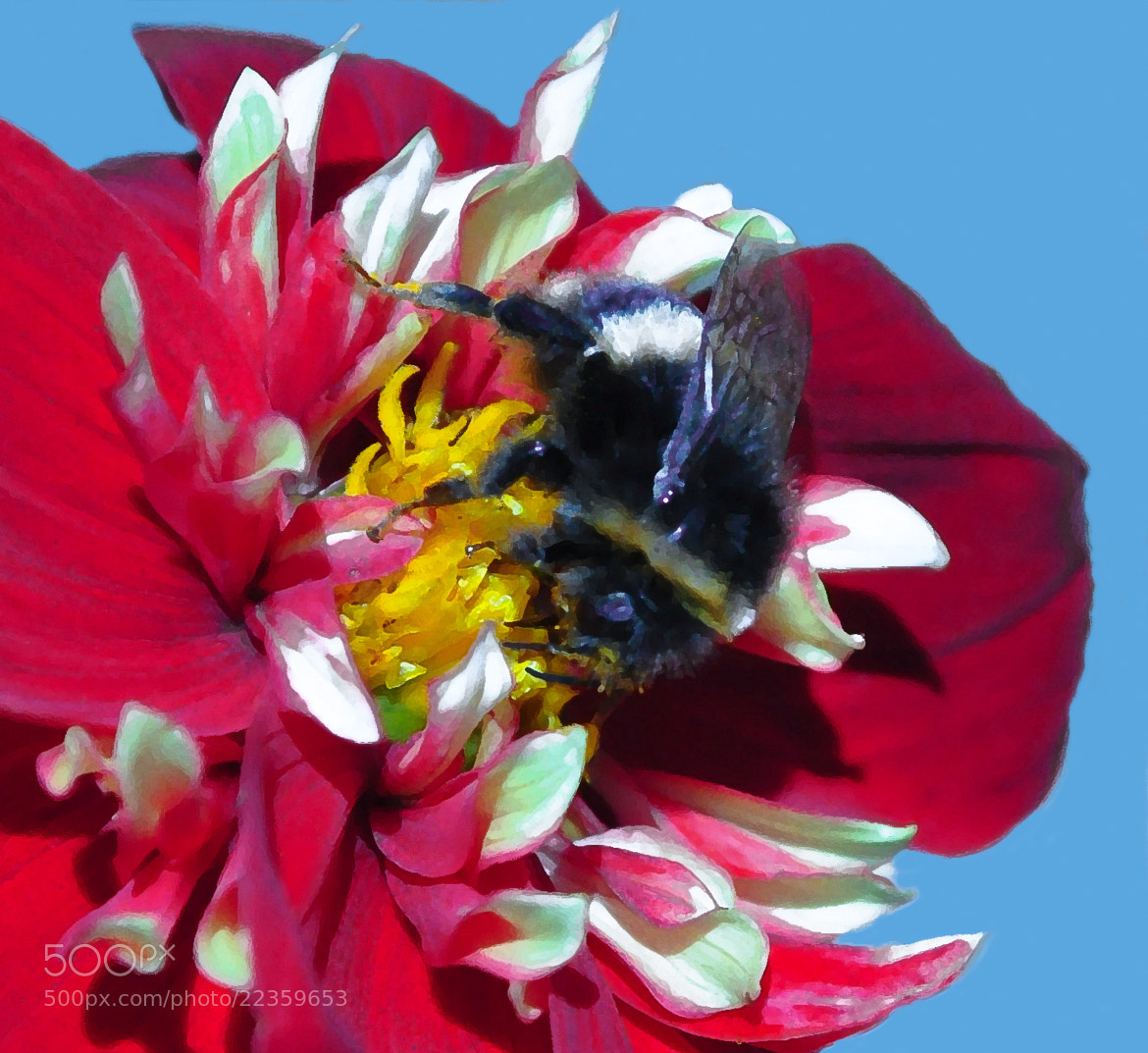 Photograph Arty Bumble Bee by Phil Scarlett on 500px