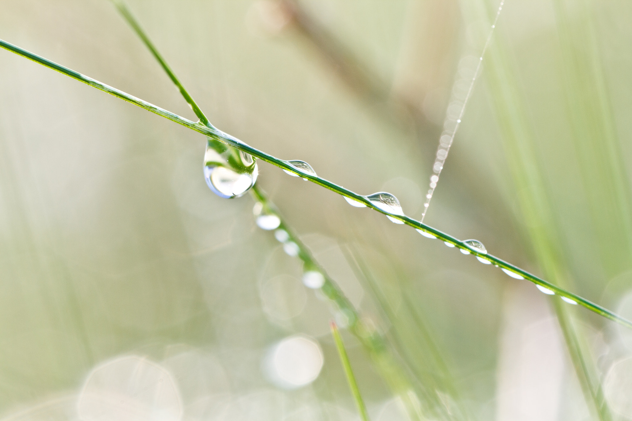 Photograph Morning dew II by Steen Nielsen on 500px