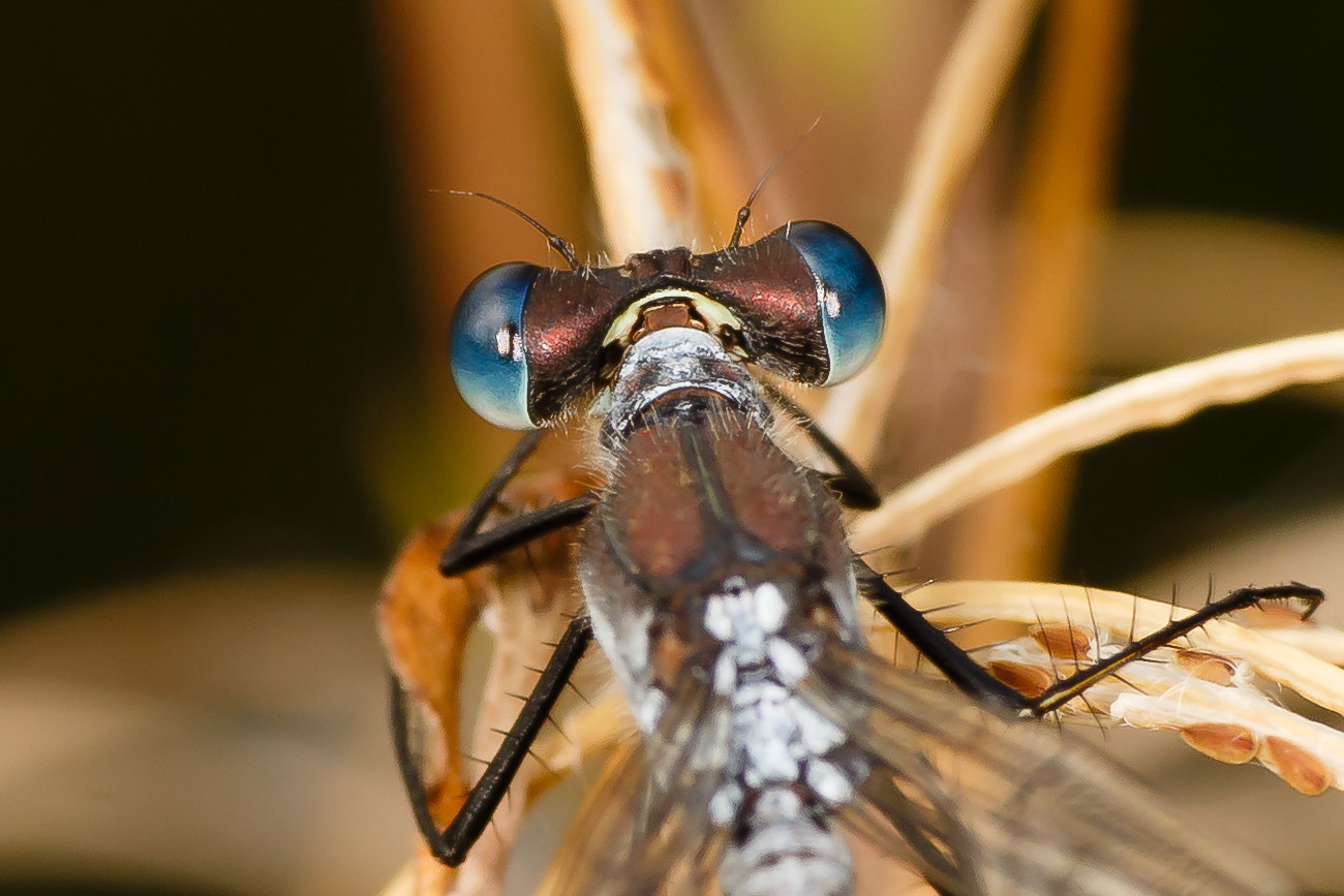 Photograph Bug by Kimmo Peltola on 500px