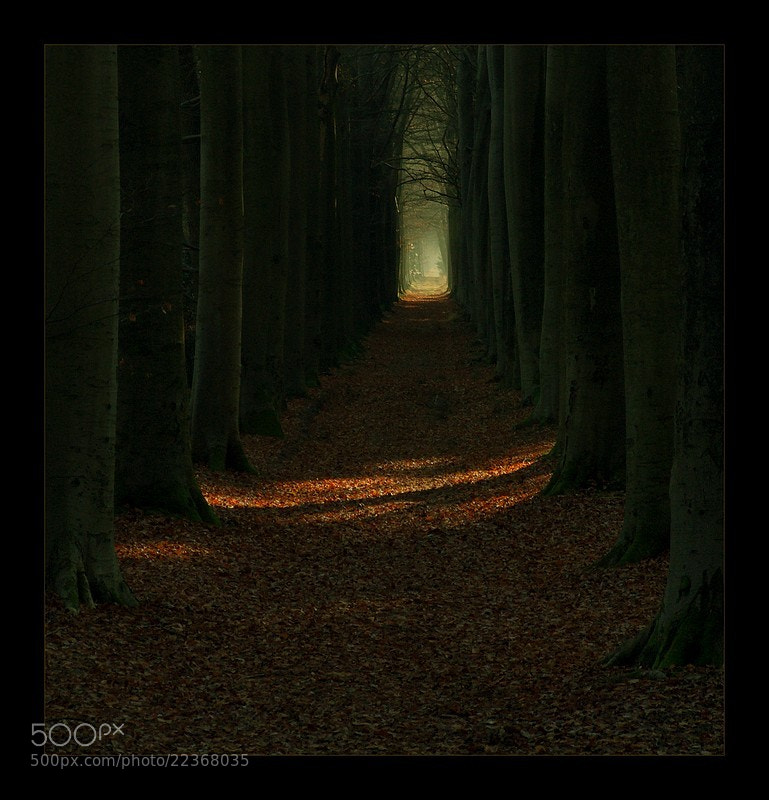 Photograph Oranjewoud ~ Nederland by patrycjab on 500px