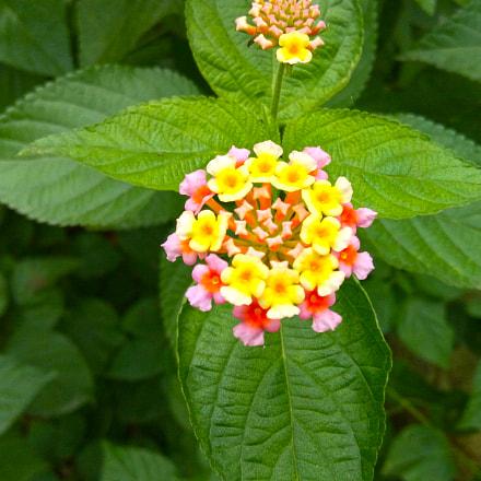 Flower.... Blossom