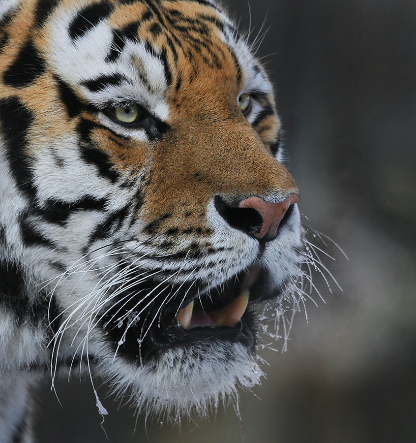 Photograph Cold breath by Klaus Wiese on 500px