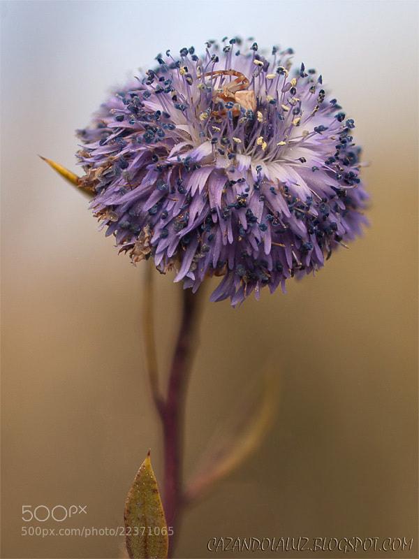 Photograph spider by Jose Carlos Castro Valdivia on 500px