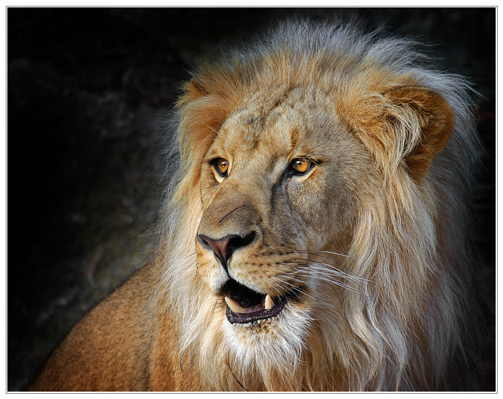 Photograph Scarface by Klaus Wiese on 500px