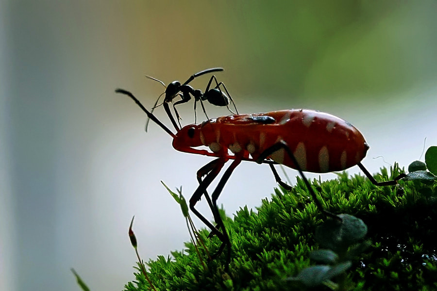 Photograph bug's rider by teguh santosa on 500px