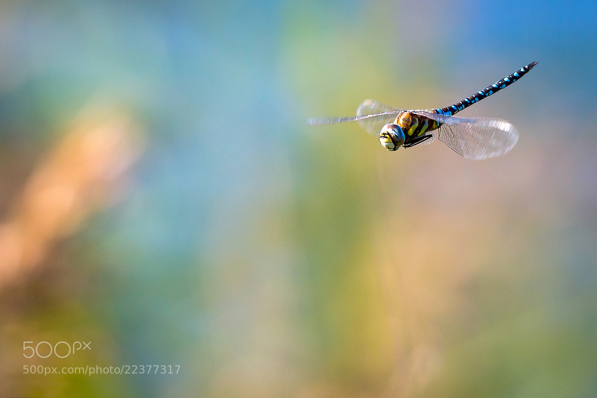 Photograph Dragonfly by Gianni Del Bianco on 500px