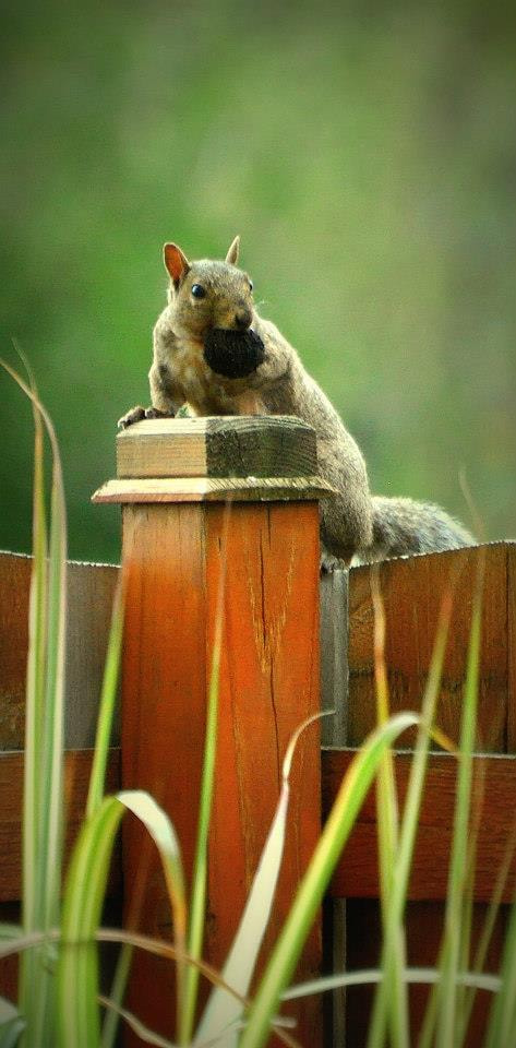 Photograph Oh Nuts! by Uta Abate on 500px