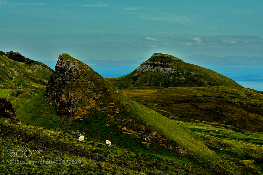 Photograph The Quiraing sheep by Carlos Fernandes on 500px