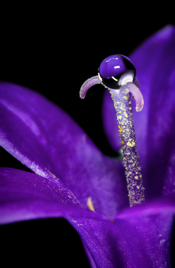Photograph Purple by Christiaan Slot on 500px