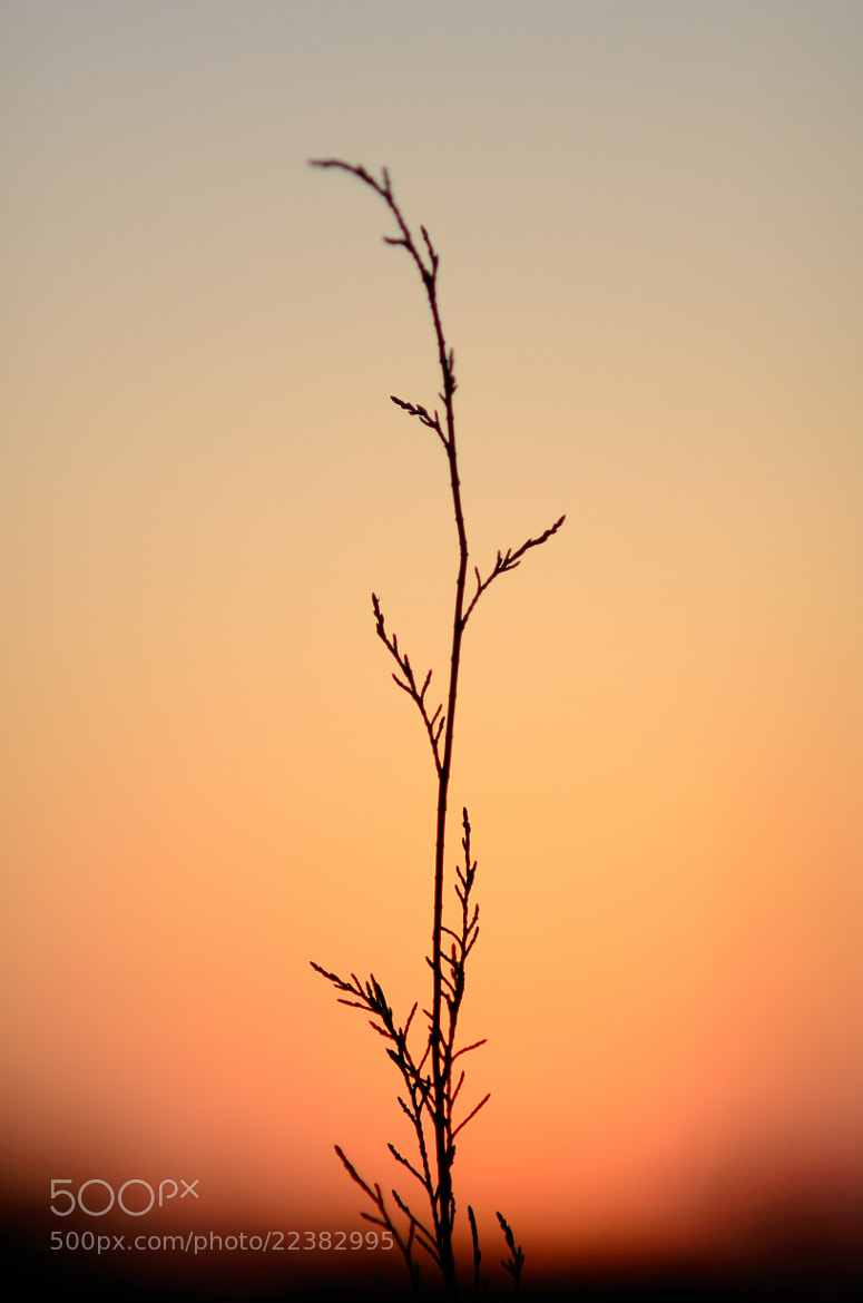 Photograph Standing Firm and Tall by Vedanta Baruah on 500px