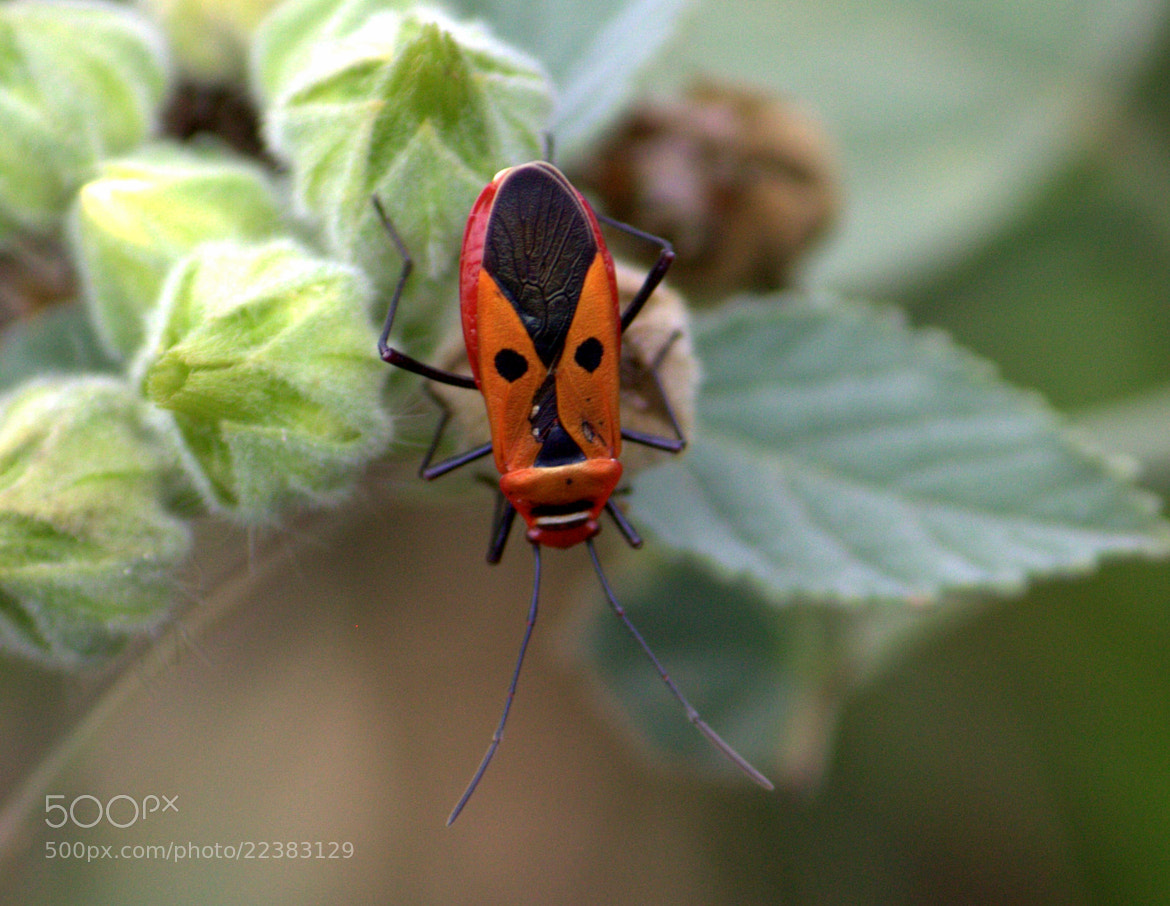 Photograph Face Mask Bug by Ravi Meghani on 500px