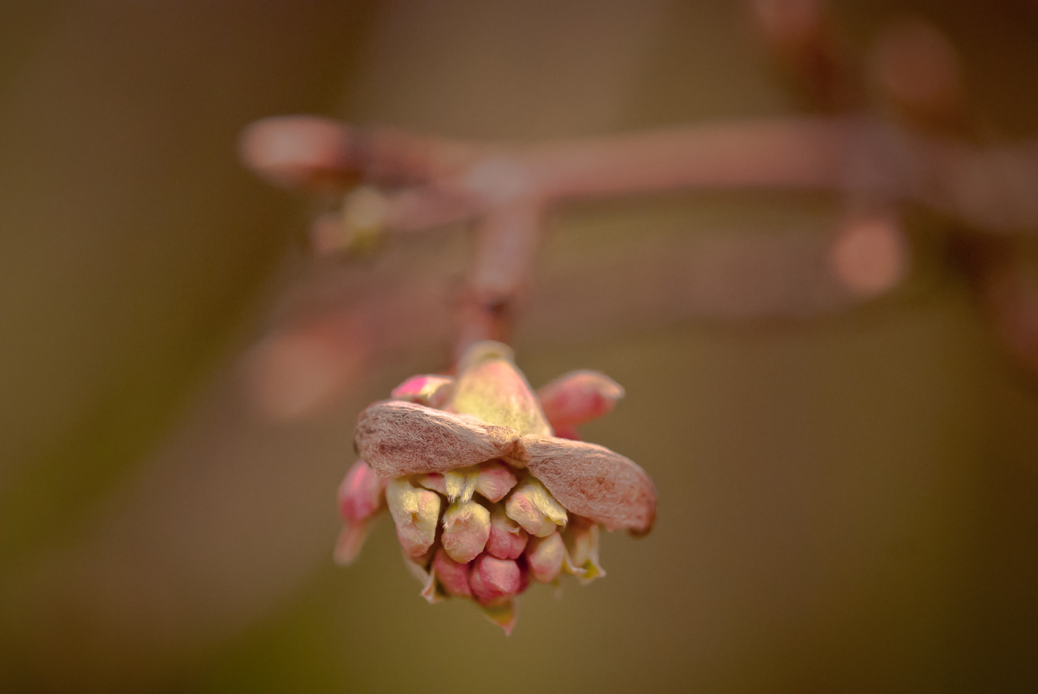 Photograph a small bud  by Bea Laumeier on 500px