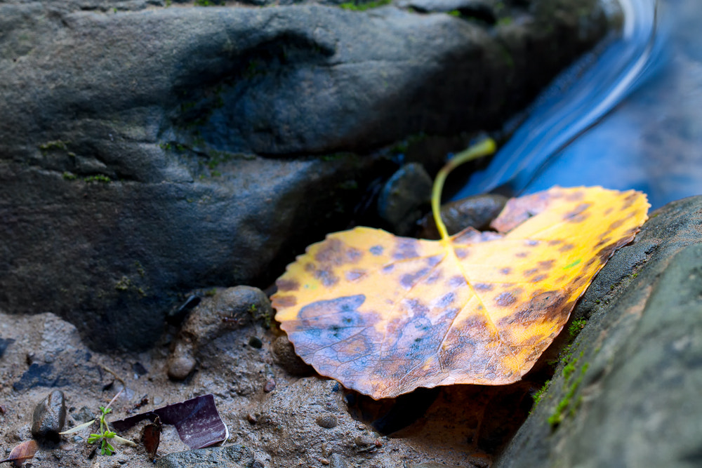 Photograph Leftover from fall by Kevin English on 500px