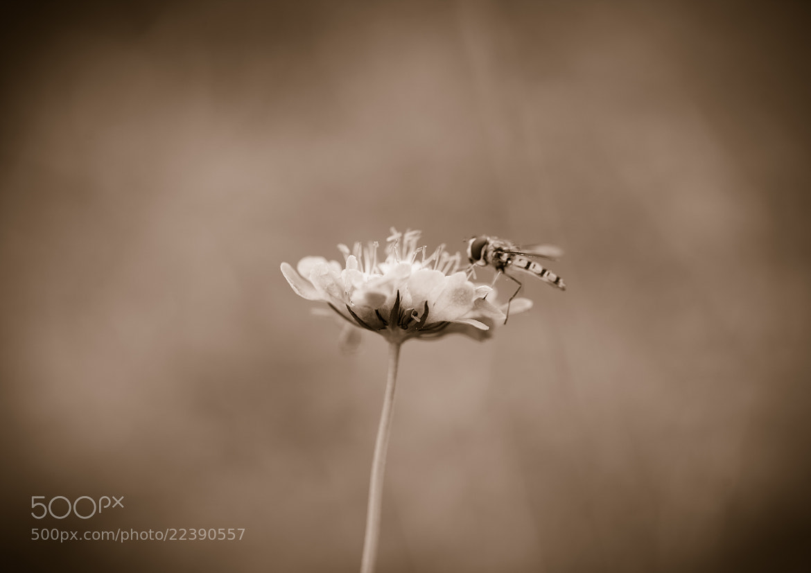 Photograph A moments rest by Andrew Johns on 500px
