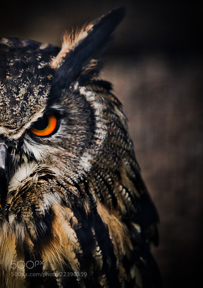 Photograph Grumpy by Andrew Johns on 500px