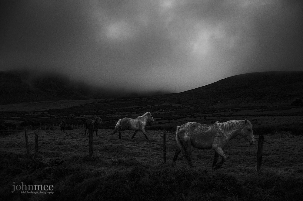 Photograph Ponies at Night by John Mee on 500px