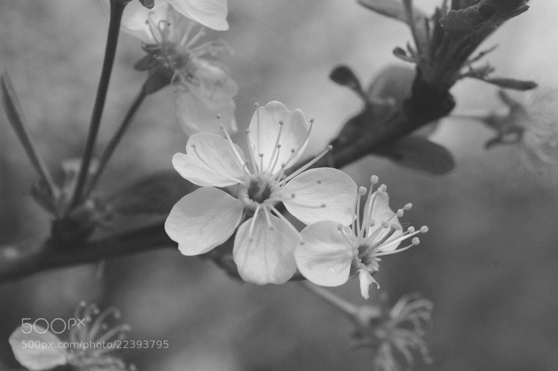 Photograph Gently like a feather by Marta Węgierska on 500px
