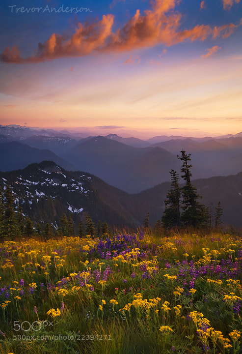 Photograph Summer Vitality by Trevor Anderson on 500px