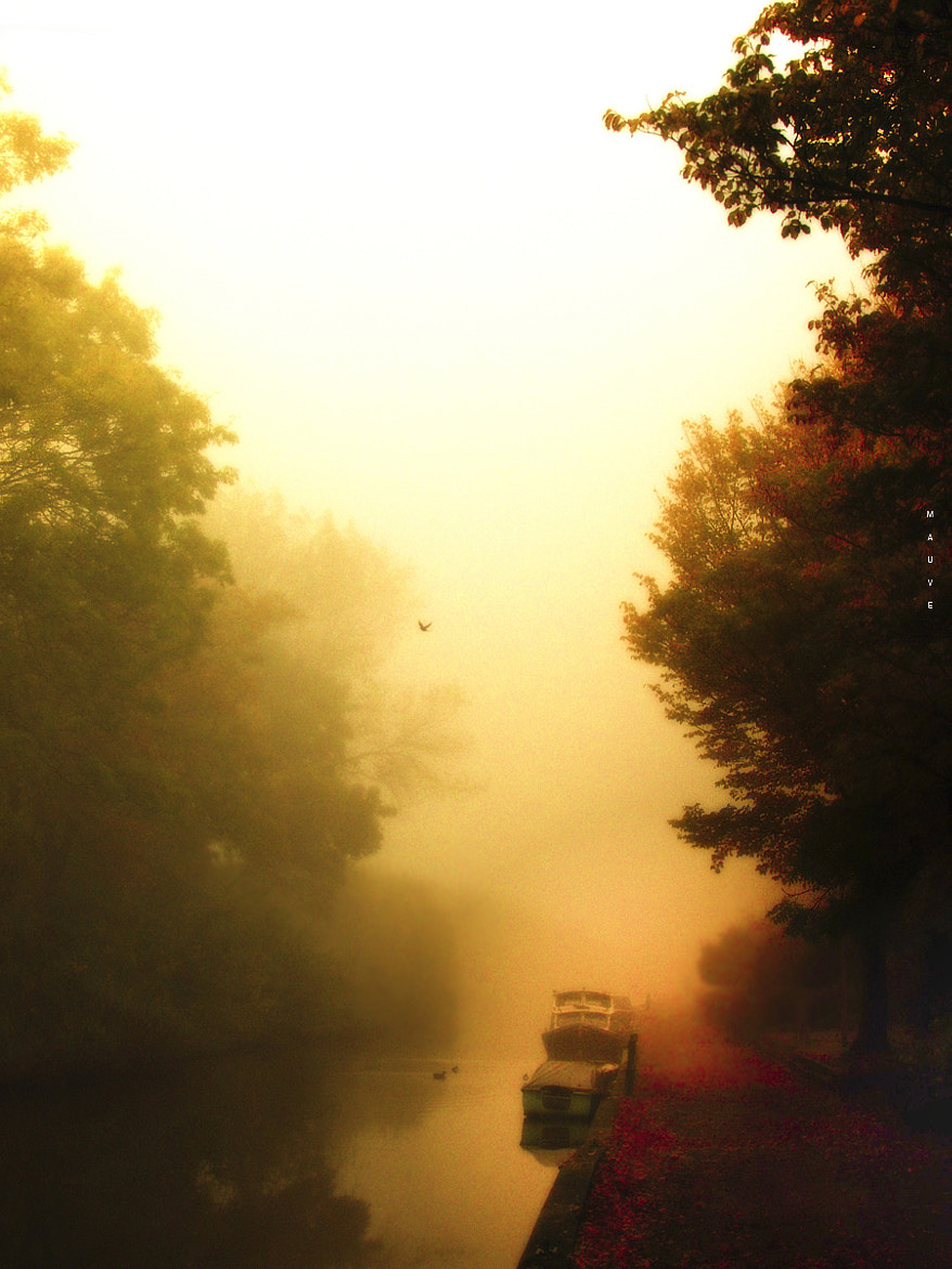 Photograph Misty fall by Mauve . on 500px