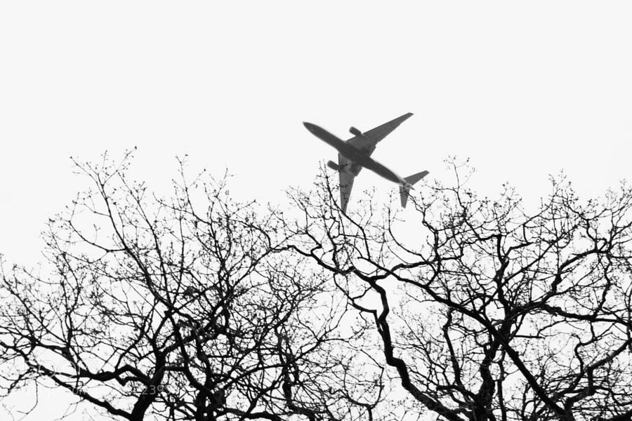 Plane by Enako (Enako)) on 500px.com