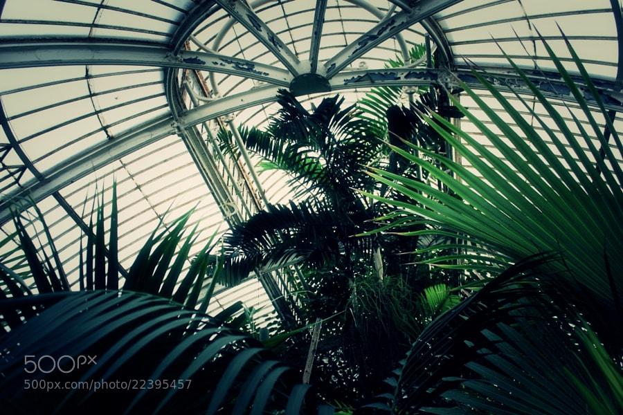 Green by Enako (Enako)) on 500px.com