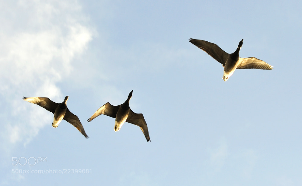 Photograph Fly past by Kevin  Keatley on 500px