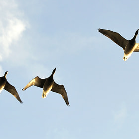 Fly past by Kevin  Keatley (kevinkeatley)) on 500px.com