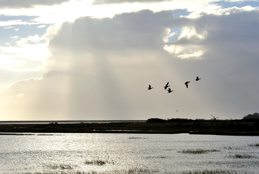 Photograph Pagham harbour by Kevin  Keatley on 500px